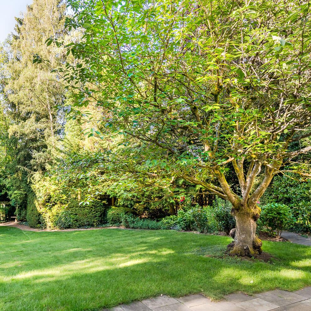 Garten mit eingewachsenen Solitärbäumen im Garten - Vermarktung durch Maklerbüro im Taunus Eberhard Horn Real Estate